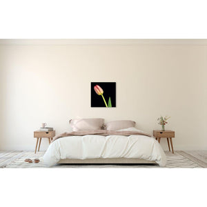 Portrait of a Pink Tulip No. 1-Wood Mounted Photograph-Tracey Capone Photography