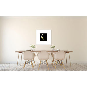 Portrait of a White Calla No. 2-Framed Archival Lustre Print-Tracey Capone Photography
