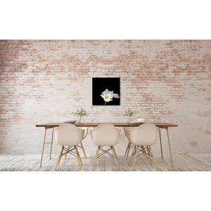 Portrait of a White Cosmos No. 2-Wood Mounted Photograph-Tracey Capone Photography
