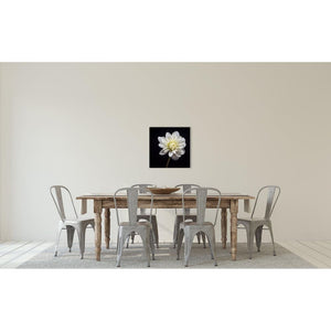 Portrait of a White Dahlia No. 3-Wood Mounted Photograph-Tracey Capone Photography