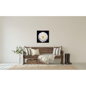 Portrait of a White Daisy No 1-Wood Mounted Photograph-Tracey Capone Photography