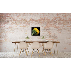 Portrait of a Yellow Sunflower No. 2-Wood Mounted Photograph-Tracey Capone Photography