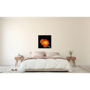 Portrait of an Orange Ranunculus No. 2-Wood Mounted Photograph-Tracey Capone Photography