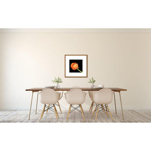 Portrait of an Orange Ranunculus No. 4-Framed Archival Lustre Print-Tracey Capone Photography