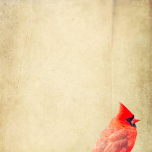 Demure | Red Cardinal Photograph-Tracey Capone Photography