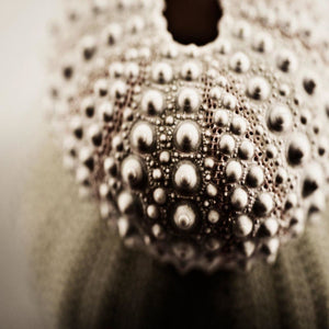 Sea Jewels No. 2 | Urchin Photograph-Tracey Capone Photography