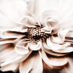 Smoke | White Dahlia Flower-Tracey Capone Photography