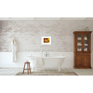 The Bath House | Seville Travel Photography-Photograph Mounted on Birch Wood Block-Tracey Capone Photography
