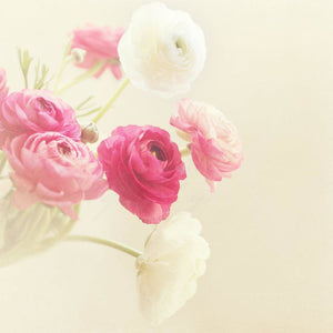 The Ranunculus | Botanical Wall Decor-Tracey Capone Photography