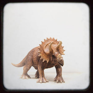 Triceratops | Kids Room Decor-Tracey Capone Photography