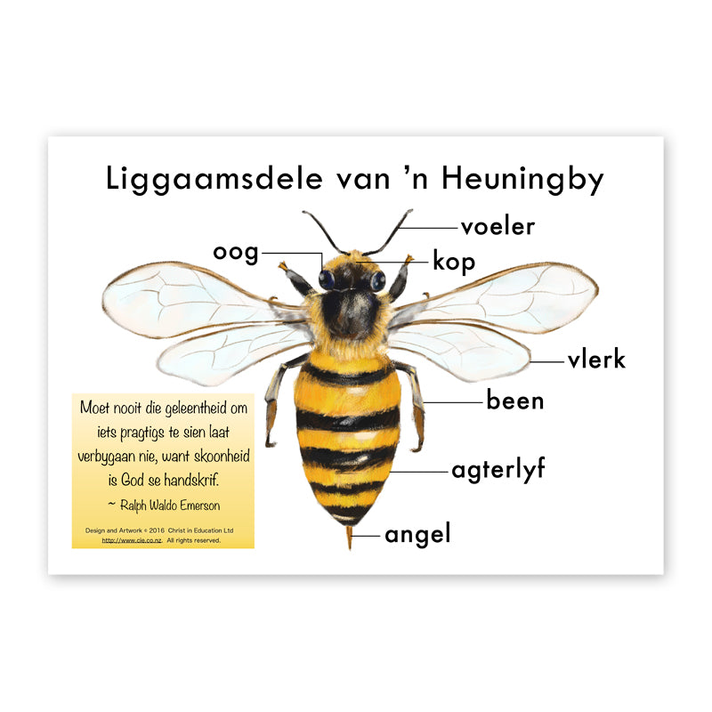 Afrikaans Poster of the Body Parts of a Bee