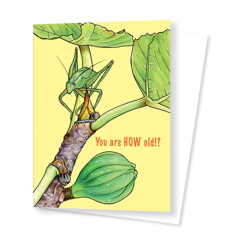Katydid (Birthday Card)