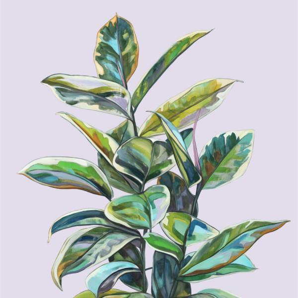 Amelie by Kate Jarman | Shop Prints | Greenhouse Interiors