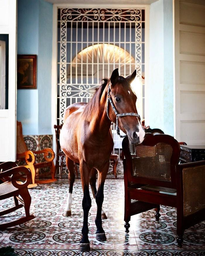 Armelle Habib Horse in the House Limited Edition Prints, Photographic prints