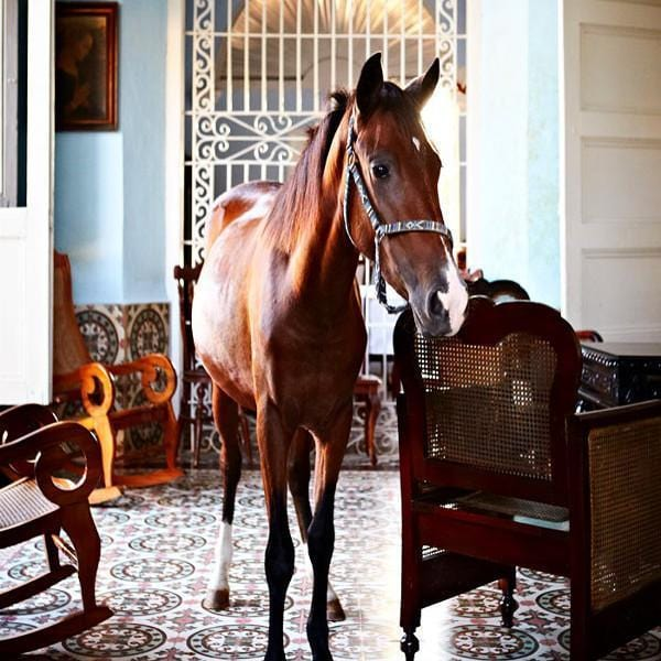 Horse In The House - Print-Prints-Armelle Habib-Greenhouse Interiors