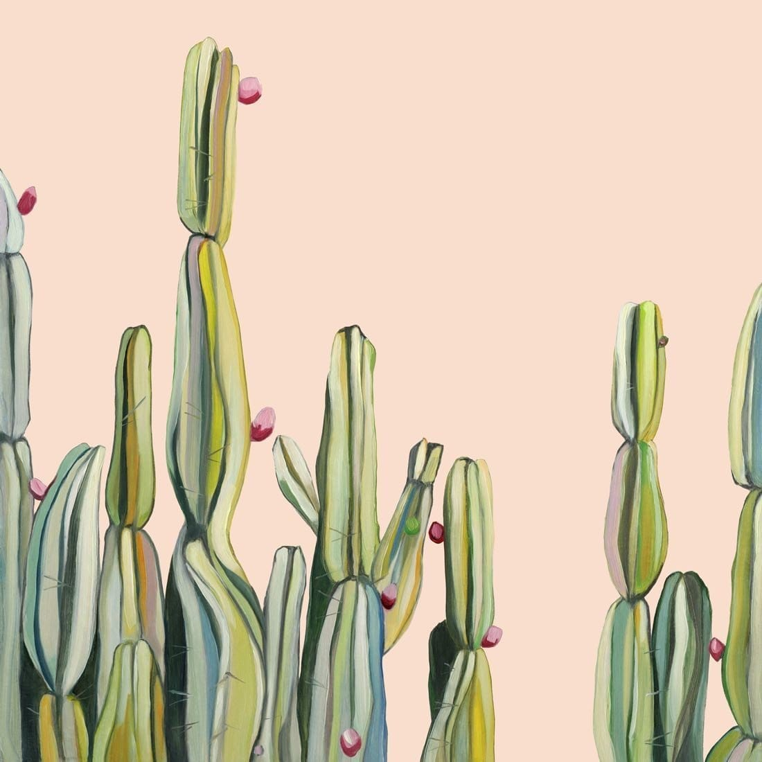 Kate Jarman Kimberley Cactus Limited Edition Prints