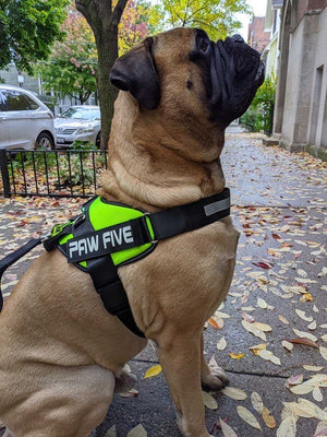 Big Dog Harness - Harness for Large Sized Breeds - Paw Five