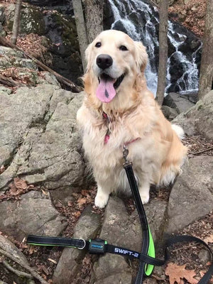 The Best Dog Leash for Walking, Running or Hiking | Paw Five