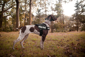 Heavy Duty Dog Harness For Any Adventure | Paw Five
