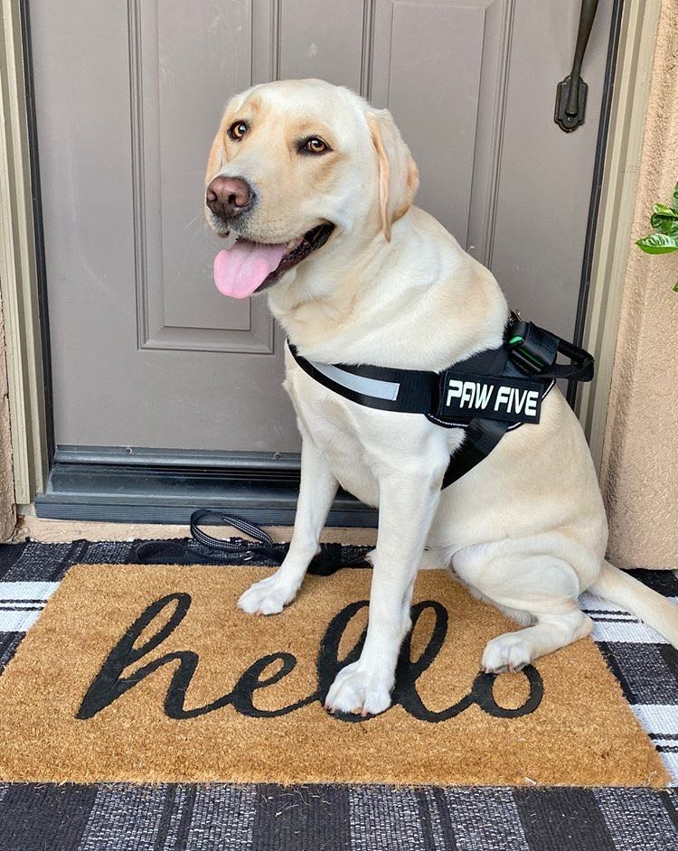 Is a Dog Harness Better Than a Collar? - Paw Five™
