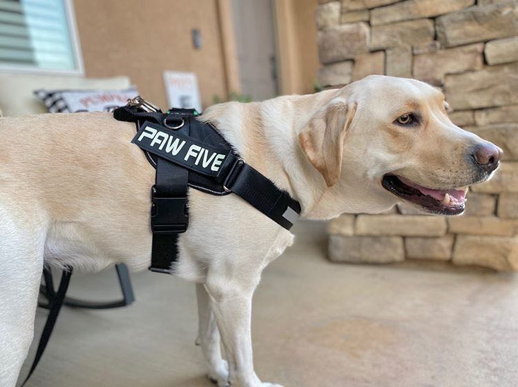 Service Dog Harness | CORE-1 Harness Service Vest for Service Dogs - Paw Five
