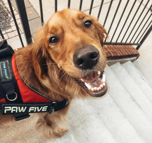 CORE-1 No Pull Harness | Paw Five
