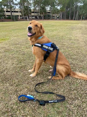 The Best and #1 Rated Dog Leash by Paw Five