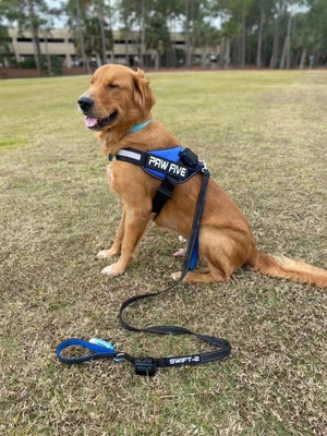 #1 Rated Dog Harness at Paw Five