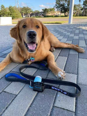 Dog Leash | The Best Dog Leash Available at Paw Five
