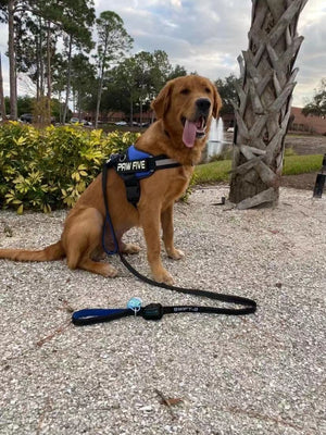 How to Choose the Best Dog Leash - Paw Five Products