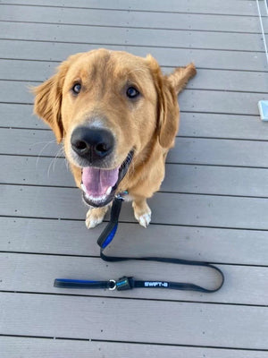 #1 Rated Dog Leash at Paw Five