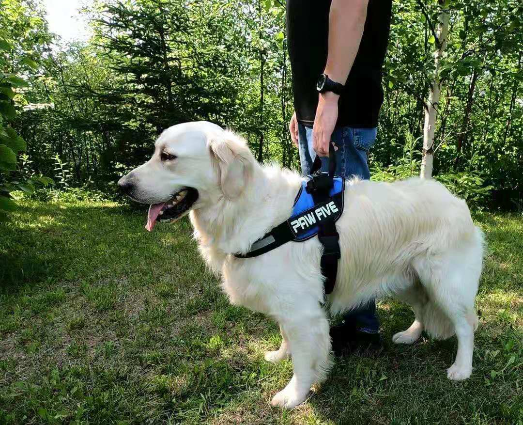 The Best Dog Harness For Your Dog | Paw Five