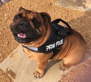 No Pull Dog Harness | CORE-1 Harness- Paw Five.com