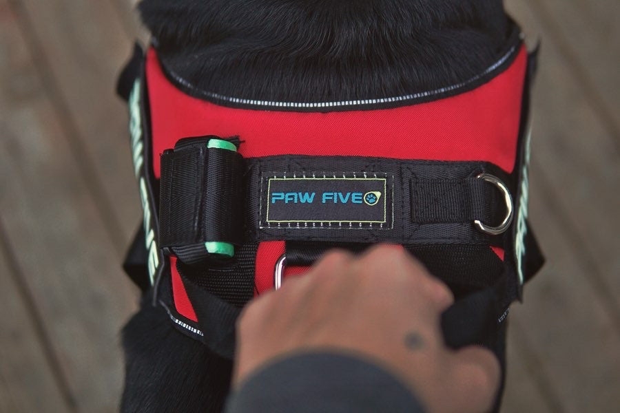 How Does An Easy Walk Harness Help Your Dog?