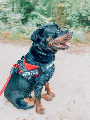 Easy Walk Harness - Get Those Walks Back on Track at Paw Five