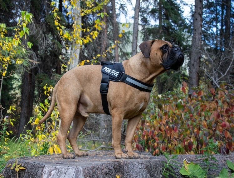 Heavy Duty Dog Harness | Choose the Best Harness For Your Dog