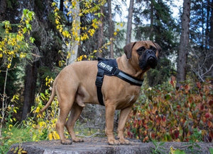 Big Dog Harness | Paw Five CORE-1 Harness Made for Large Breeds