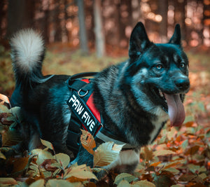 Why You Should Use A Dog Harness- Pros and Cons