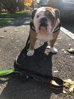 The Best Dog Leash Money Can Buy for 2021 | Paw Five