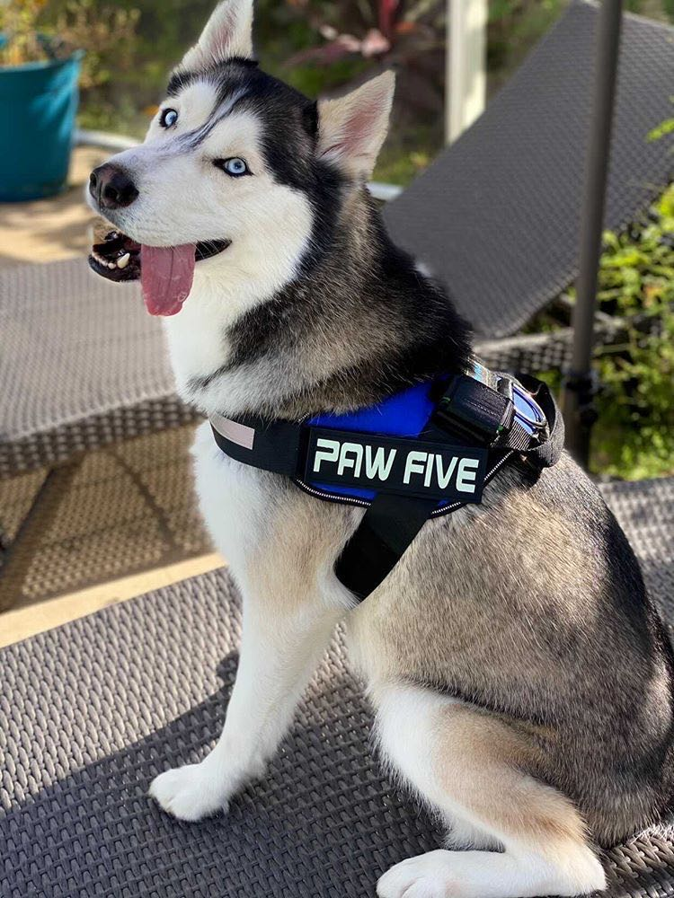 The Best Service Dog Harness and Vest for 2020/2021