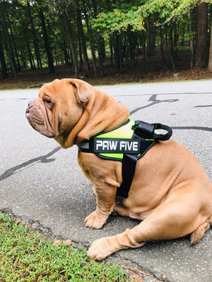 The Ultimate Dog Harness | Paw Five.com