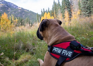 The Best Big Dog Harness for Large Breed Dogs - Heavy Duty and Durable