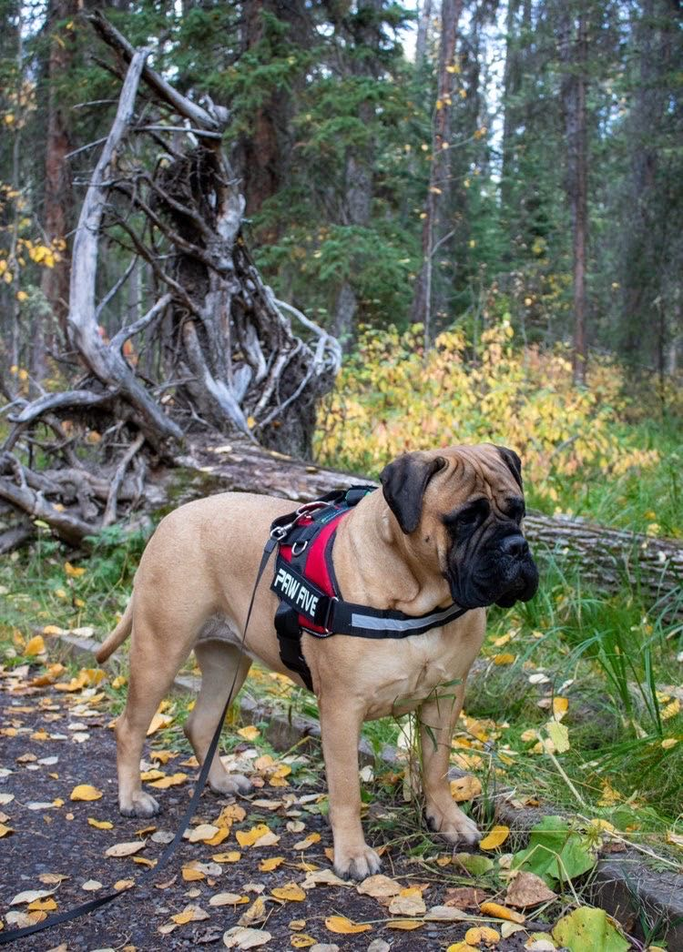 The Big Dog Harness for Large Breeds - Heavy Duty at Paw Five.com