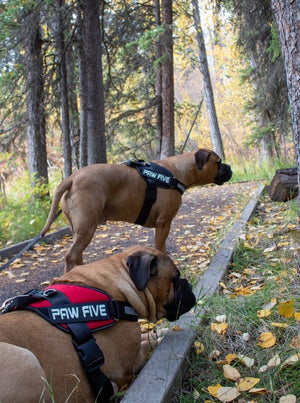 Heavy Duty Dog Harness- No Pull Easy Walk and Innovative Convenience
