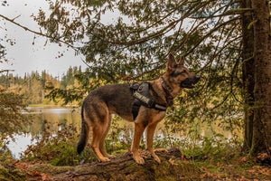 Easy Walk Harness- Paw Five CORE-1 Harness