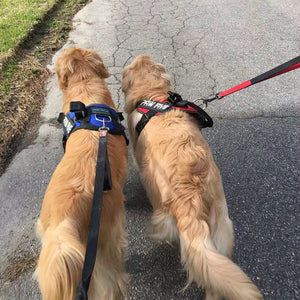 Easy Walk Harness - Gets Your Walks Back on Track! - Paw Five.com
