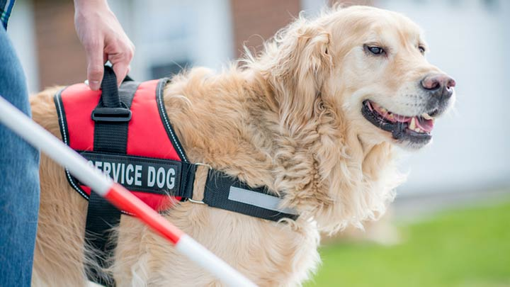 Selecting The Right Service Dog Harness- Support Service Dog Vest
