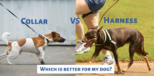 Dog harness Versus Dog Collar- Which is better?