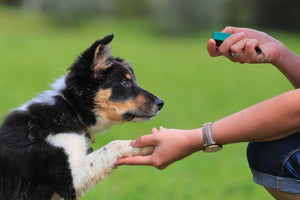 Dog Training Hacks From the Professionals