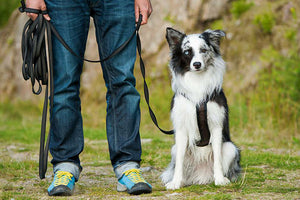 12 Dog Training Hacks To Make Your Life Easier
